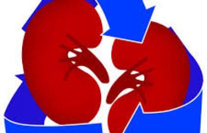 """תוצאים כלייתיים ולבביים בטיפול בסוכרת סוג 2, ד""""ר עופרי מוסנזון"""